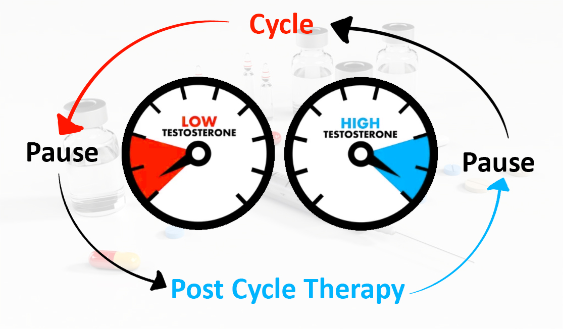 Why Post Cycle Therapy is so important after the cycle?